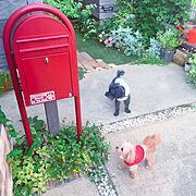 犬と暮らす/ナチュラルガーデン/防犯対策/グリーンのある暮らし/花壇/BOBI…などのインテリア実例