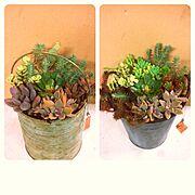 観葉植物/手作り/多肉植物/Entrance…などのインテリア実例