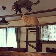 猫のいる暮らし/キジ猫/築40年以上/DIY/パーテェーションdiy/1×4材…などのインテリア実例
