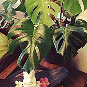 雑貨/観葉植物/バリリゾート/アジアン風/Bedroom…などのインテリア実例