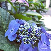 Entrance/Instagram→kayo_daily/植物のある暮らし/いいね、フォロー本当に感謝デス☺︎…などのインテリア実例