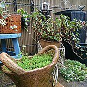 私の庭/ガーデニング/いつもいいね!ありがとうございます♪/おはようございます♡/よい一日を♡…などのインテリア実例