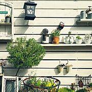 セダム/多肉植物/玄関ガーデン/いただきものいっぱいです(
