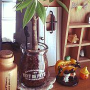 パキラ/プリン瓶/ハロウィン/転写シール/セリア/植物…などのインテリア実例