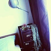 いなざうるす屋さん/植物/いなざうるす屋さん★/ジャーナルスタンダードファニチャー/インダストリアルな照明…などのインテリア実例