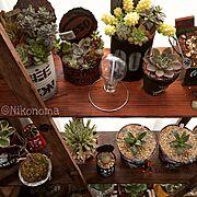 植物/寄せ植え/JUNK/多肉/リメ缶/DIY…などのインテリア実例