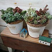 多肉植物の人気の写真