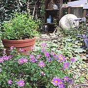 朝の風景/BOHO/ボヘミアン/DIY机/キャスター付きテーブル/お庭…などに関連する他の写真