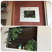定点観測/レピスミウム/アガベ/ベルメゾン/Boho Style/壺…などに関連する他の写真