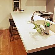観葉植物/クリナップ クリーンレディ/L型 キッチン/Kitchen…などのインテリア実例
