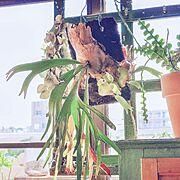 Overview/レトロ/看板/ディスプレイ/アンティーク/観葉植物…などに関連する他の写真