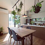 レデッカー/リビングダイニング/折り紙/観葉植物/リビング/わんこと暮らす家…などに関連する他の写真