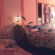 ストレチアレギネ/H&M HOME/犬と暮らす/間接照明/モンステラ/トルコランプ…などのインテリア実例