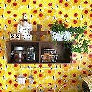 My Shelf/ニトリ/男前/アンティーク/IKEA/観葉植物…などに関連する他の写真
