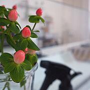 植物のある暮らしのインテリア実例