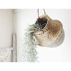 壁/天井/ウスネオイデス/シーグラスバスケット/植物のある暮らし/植欲...などのインテリア実例 - 2018-02-05 21:25:43