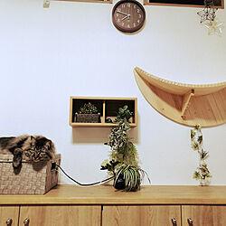壁/天井/建売り一戸建て/観葉植物/DIY/ねこのいる日常...などのインテリア実例 - 2021-05-20 21:53:24