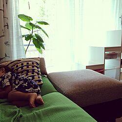 リビング/ウンベラータ♡/こどもと暮らす。/IKEA/観葉植物のインテリア実例 - 2016-09-02 00:02:02