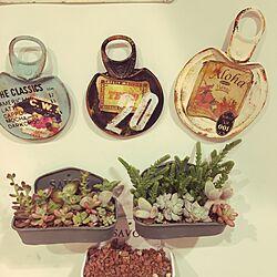 キッチン/ハンドメイド/多肉植物/マグネット/西海岸インテリア...などのインテリア実例 - 2016-01-29 20:49:39