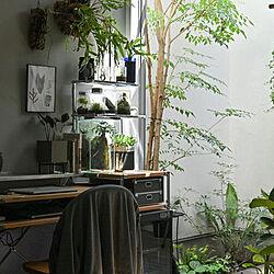 机/仕事部屋/男前/観葉植物/中庭デッキ...などのインテリア実例 - 2021-04-11 07:36:38