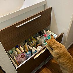 洗面台下収納/ねこのいる暮らし/猫/LIXIL/茶トラ...などのインテリア実例 - 2020-06-02 07:23:58