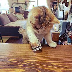 男前インテリア/ブルックリンスタイル/猫たちと暮らす/キッチンカウンター/アンティーク...などのインテリア実例 - 2020-08-08 00:49:27