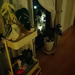リビング/暮らしの一コマ/グリーンのある暮らし/ニトリ/斑入りモンステラ...などのインテリア実例 - 2018-07-31 23:41:08