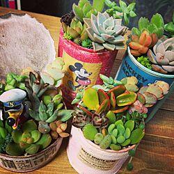 リメ缶/リメイク缶/多肉植物/植物のインテリア実例 - 2014-03-10 20:52:20