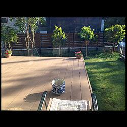 趣味/庭からの眺め/庭/ナチュラル/菜園野菜のインテリア実例 - 2021-05-04 23:13:18
