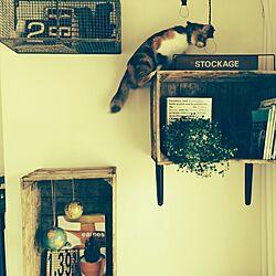 壁/天井/寝るのは、最上段の網の上/ゆぴのこさん/ポテトBOXのインテリア実例 - 2014-09-30 08:45:18