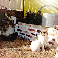 玄関/入り口/庭/猫/植物/アンティークレンガのインテリア実例 - 2014-02-12 16:47:46