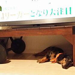 リビング/テレビ台の下/いぬと暮らすのインテリア実例 - 2016-07-05 22:34:05