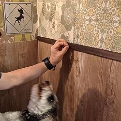バス/トイレ/腰板DIY/DIY/壁紙DIY/Hatton...などのインテリア実例 - 2021-09-21 08:38:01