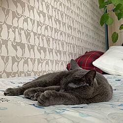 空梅雨/観葉植物/朝の1枚/植物のある暮らし/猫の壁紙...などのインテリア実例 - 2019-07-09 06:11:40