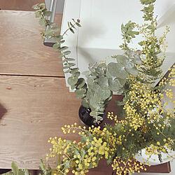 リビング/ミモザ/ユーカリ/BALMUDA The Range/観葉植物...などのインテリア実例 - 2018-03-02 12:42:57