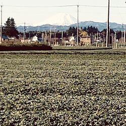 360°茶畑付近/富士山/本日は晴天なり/朝は-2℃のインテリア実例 - 2014-12-07 10:32:31