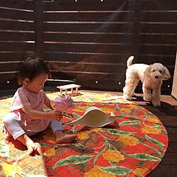 ニトリ/NITORI/女の子のインテリア/犬のいる暮らし/湘南で暮らす。...などのインテリア実例 - 2020-08-24 12:05:46