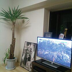 リビング/ユッカ/植物のインテリア実例 - 2014-02-09 20:16:48