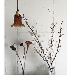 壁/天井/アンティークシェード/桜/お正月/植物...などのインテリア実例 - 2016-01-01 21:29:08