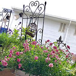 玄関/入り口/ほほえみ/ミニ薔薇/ベランダガーデンのインテリア実例 - 2018-05-30 15:59:22
