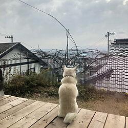 部屋全体/バラのアーチ/バラのある庭/犬と暮らす/ウッドデッキDIY ...などのインテリア実例 - 2019-01-08 09:17:34
