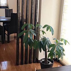 間仕切り/DIY/観葉植物/リビング/ラブリコ 2×4...などのインテリア実例 - 2019-11-15 15:55:27