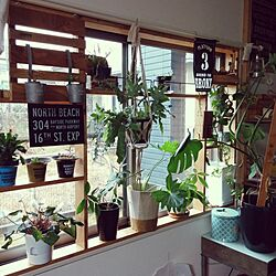 棚/デコ窓/DIY/観葉植物/観葉植物のある部屋のインテリア実例 - 2016-12-27 11:06:27