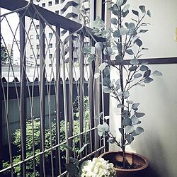 IKEA/フェイクグリーンのある暮らし/フェイクグリーン/観葉植物/玄関/入り口のインテリア実例 - 2019-03-20 22:24:38