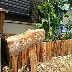 玄関/入り口/ノーグリーン ノーライフ/家庭菜園のインテリア実例 - 2017-07-07 12:45:57