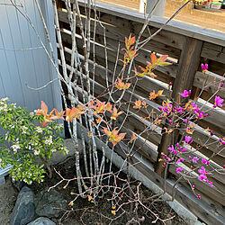 アセビの花/サンシュユの花/アオダモ/雑木林の庭/雑木林風ガーデン...などのインテリア実例 - 2021-04-23 06:04:20