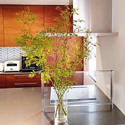 キッチン/枝もの/名前わからない植物/ステンレスワークトップ/オリジナルキッチン...などのインテリア実例 - 2021-04-11 05:44:46