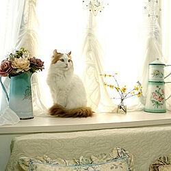 猫と暮らす/フランスアンティーク/アンティーク/ホーロー/アメリカンカール...などのインテリア実例 - 2019-01-29 10:43:55