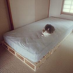 ベッド周り/パレットベッド/1×4材/パレットDIY/団地...などのインテリア実例 - 2020-06-27 08:05:47