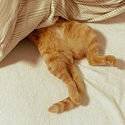 ベッド周り/一戸建て/猫スペース/暮らしのひとこま/我が家の癒し♥︎︎∗︎*゚...などのインテリア実例 - 2020-04-18 14:10:10